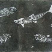 Fracking: Devonian fishes