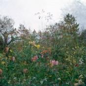 Horizontal Garden, Giverny